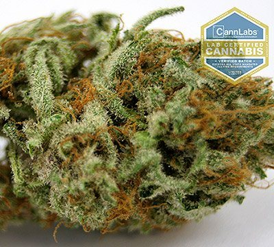 medical cannabis dispensary in Englewood, CO